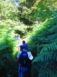 Ascesa ombreggiata al Monte Falterona